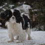 Playing in snow_Ziva