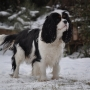 Showing in snow_Ziva