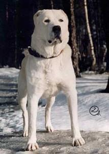 Stredoázijský pastiersky pes