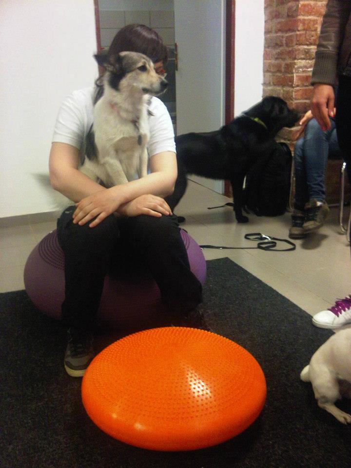Terapeutická sučka Roxy