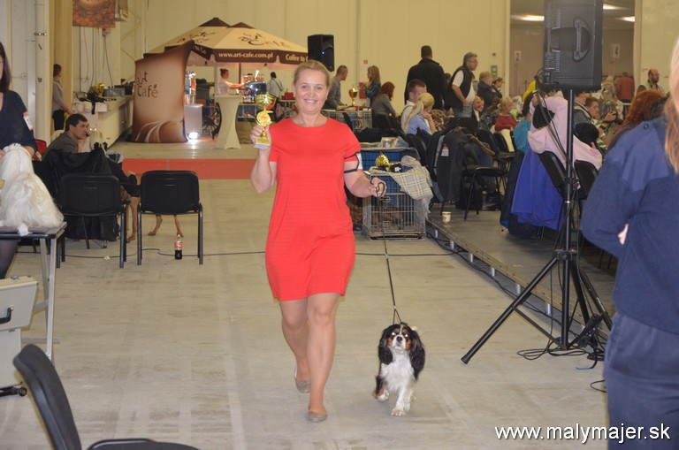 Artemis Z Malého Majera DANUBEduoCACIB, v triede šampionov V1CAC,CACIB,BOB splnila nimináciu na Cruft's 2016
