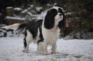 Showing-in-snow_Ziva