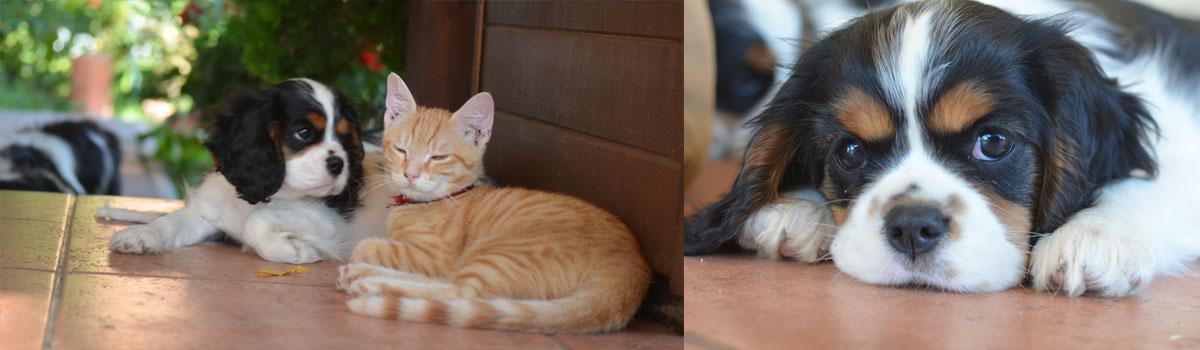 Kavalier a mačka