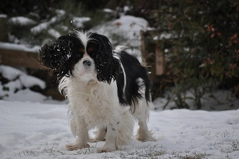 Banner Playing in snow_Ziva