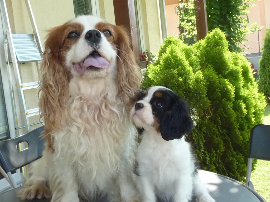 Ziva a Rocky, láska na prvý pohľad