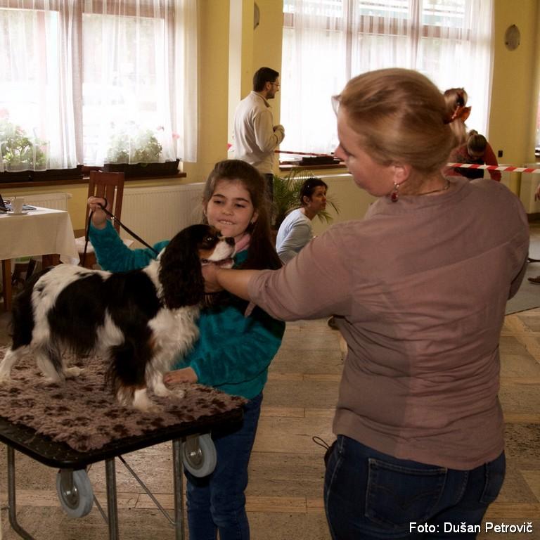 Tréning sa nevyhol ani junior handlerom, malá Paťka pôjde v Nitre do svojho prvého kruhu