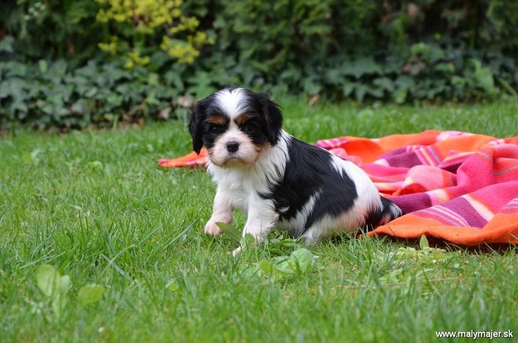 Chloe Z Malého Majer 5 týždňov